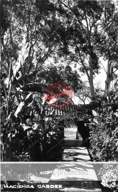 """Hacienda Garden"". This real photo postcard, with logo ""Peter Arnold"", shows the gardens of Posada Ajijic and was mailed in 1951."
