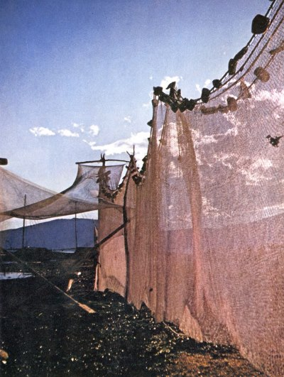 Alfredo Navarro España. c 1950. Photograph of fishing nets at Lake Chapala.